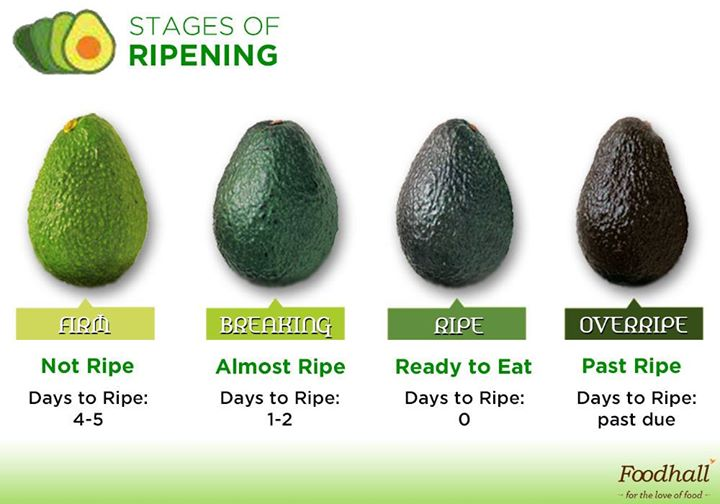 Looking for the perfect Avocado? Here's how to select just the right one.